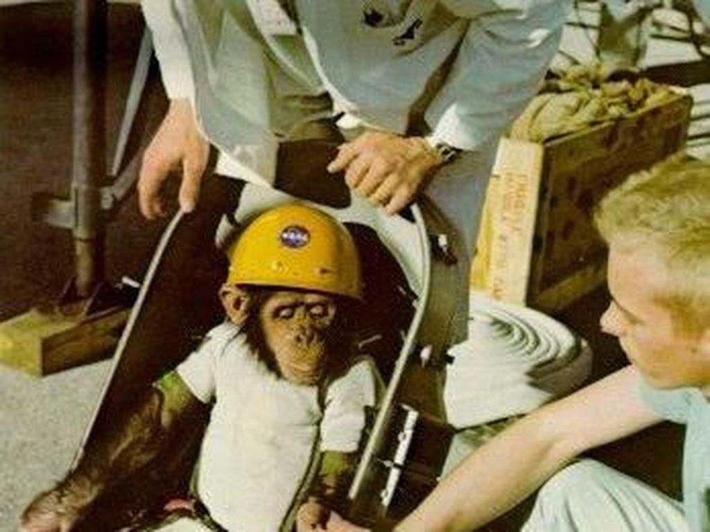 Ham, Pendahulu Yuri Gagarin dan Neil Armstrong di Luar Angkasa