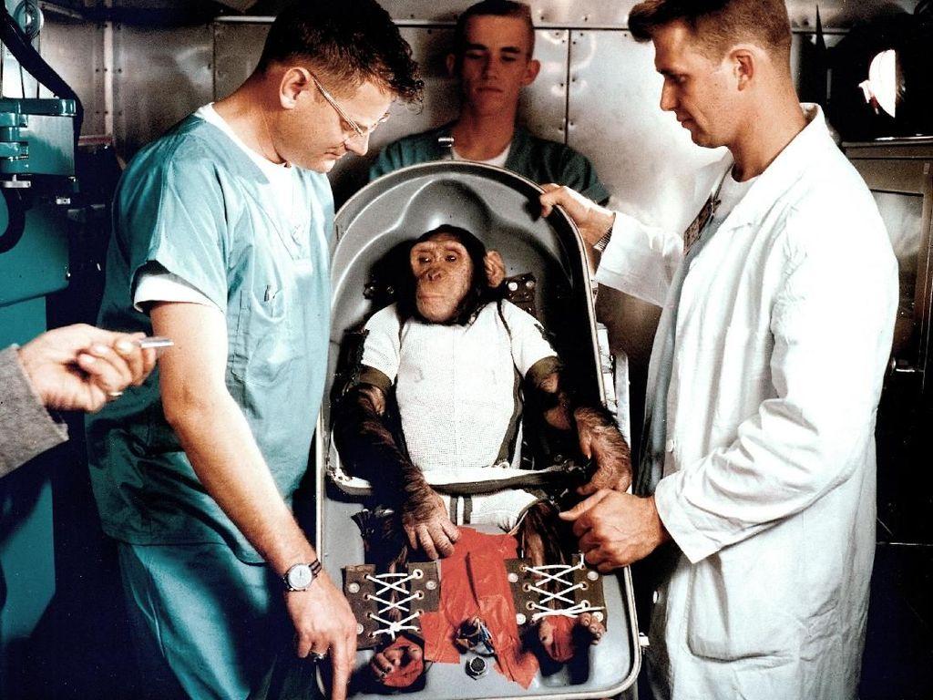 Mengingat Ham, Simpanse Pertama di Luar Angkasa