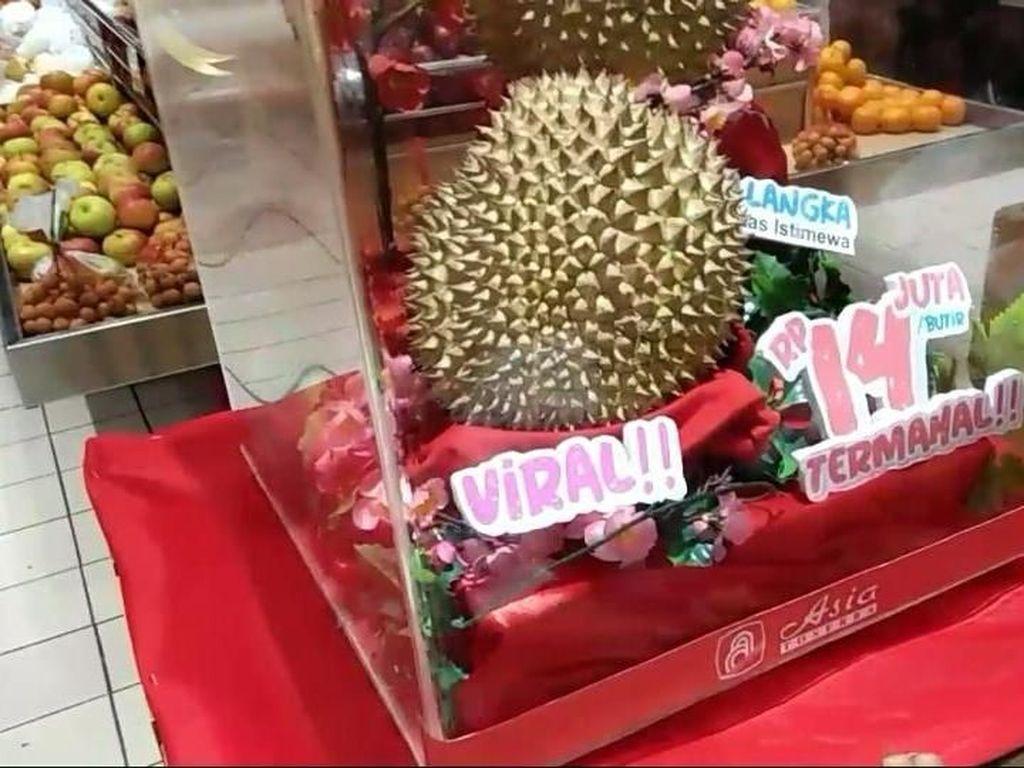 Begini Rasa dan Tekstur Durian J-Queen Rp 14 Juta yang Viral