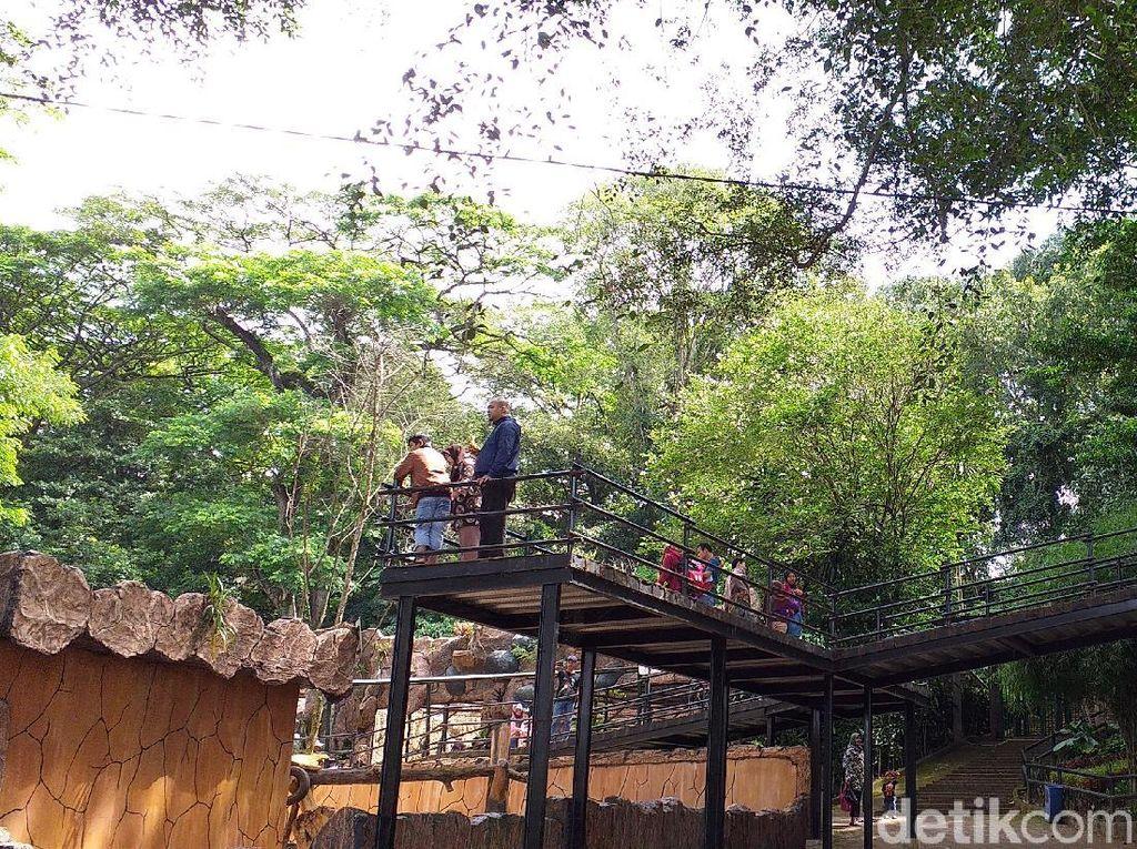 Libur Imlek, Pengunjung Kebun Binatang Bandung Meningkat