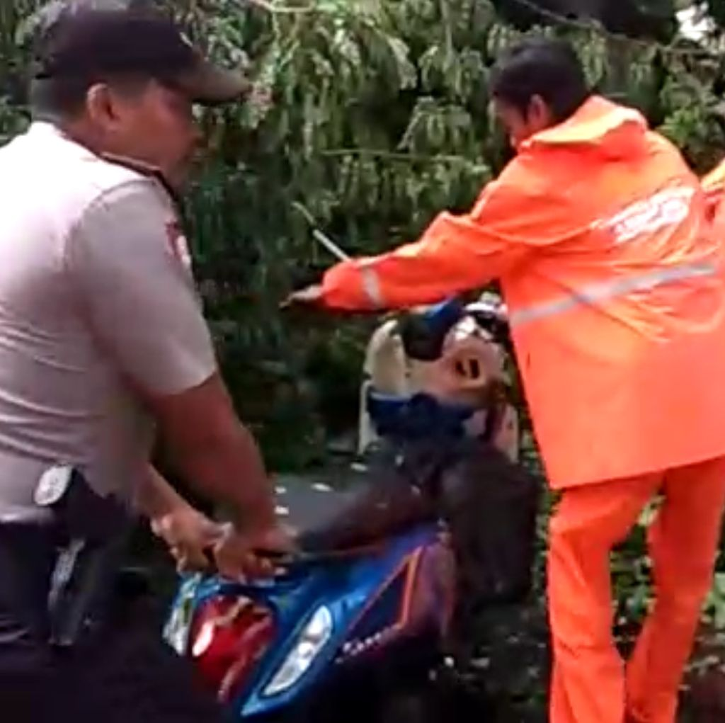 Pohon Tumbang Timpa Motor di Jalan Gerbang Pemuda Senayan