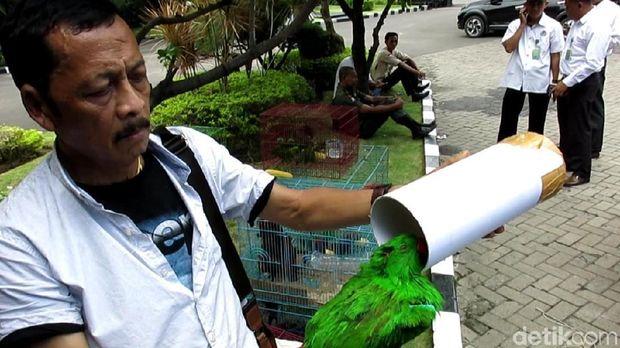 Ditpolair Polda Jatim Gagalkan Pengiriman Unggas Langka dari Papua