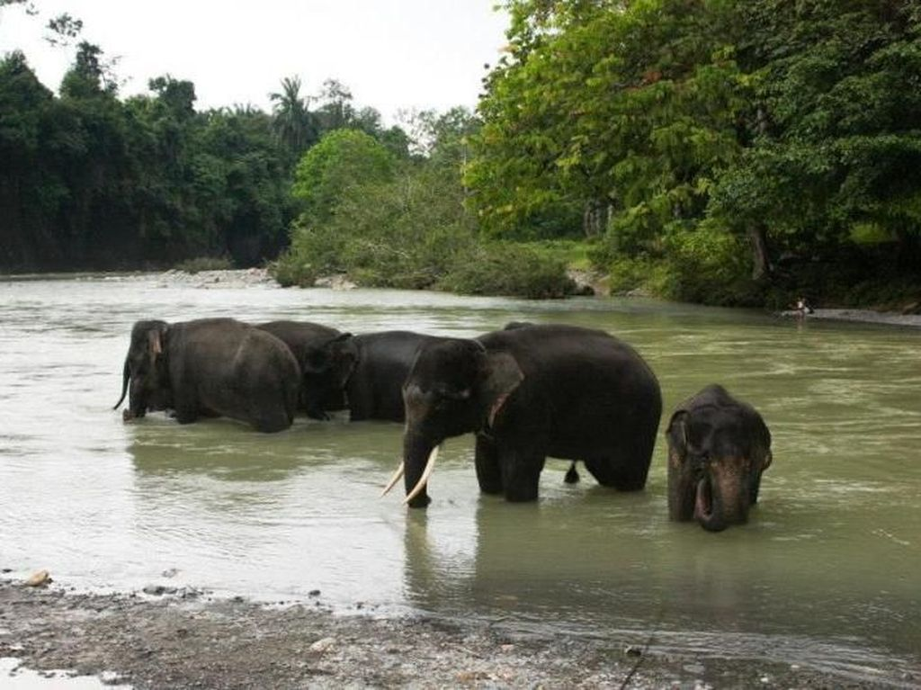 Tempat Nicholas Saputra Memandikan Gajah