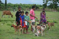 Diskeswan mencatat populasi anjing di Dompu ada seribuan