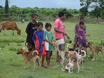6 Warga Dompu NTB Meninggal, Ribuan Ekor Anjing Ditembak Mati