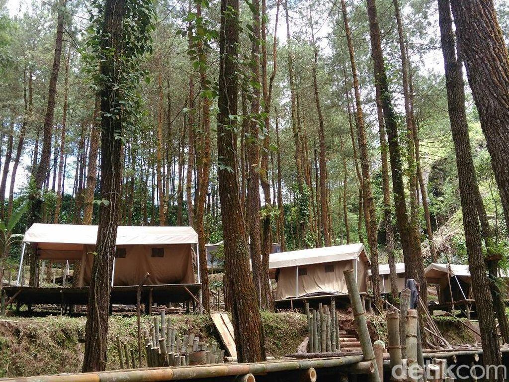 Foto: Tempat Glamping Seru di Purworejo