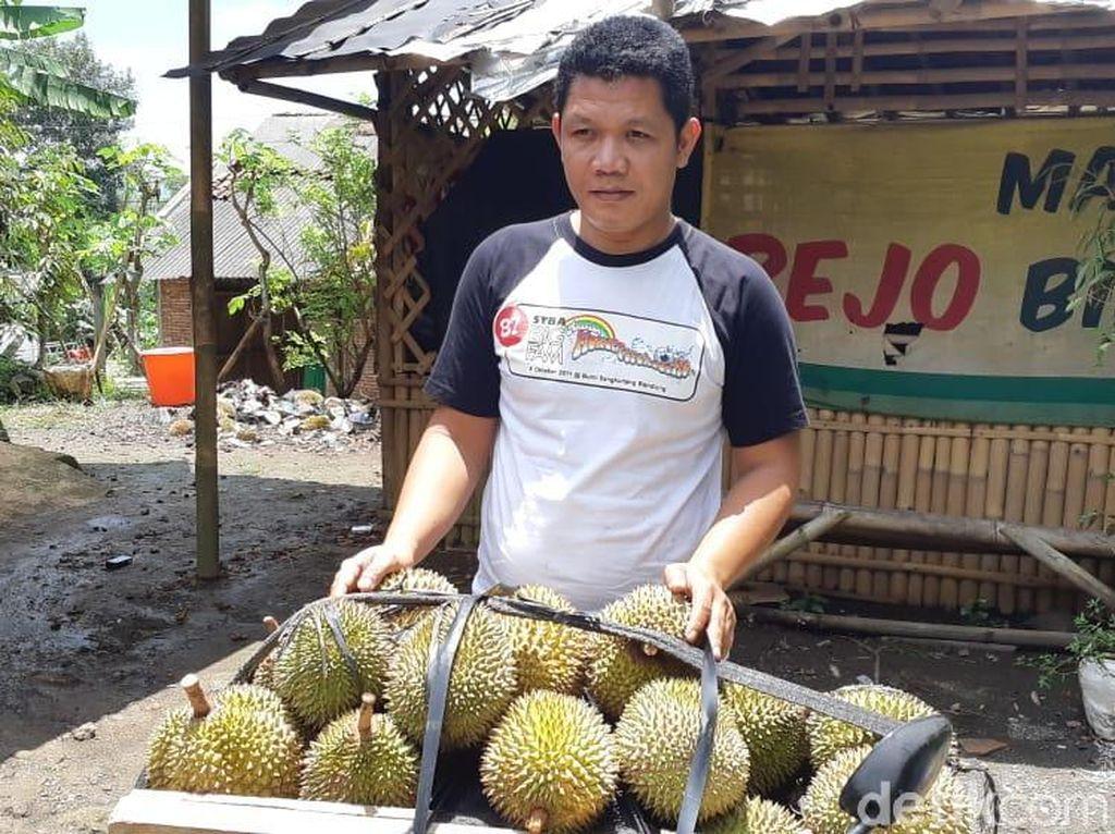 Ini Cerita Petani Mengapa Durian Banyumas J-Queen Dijual Mahal