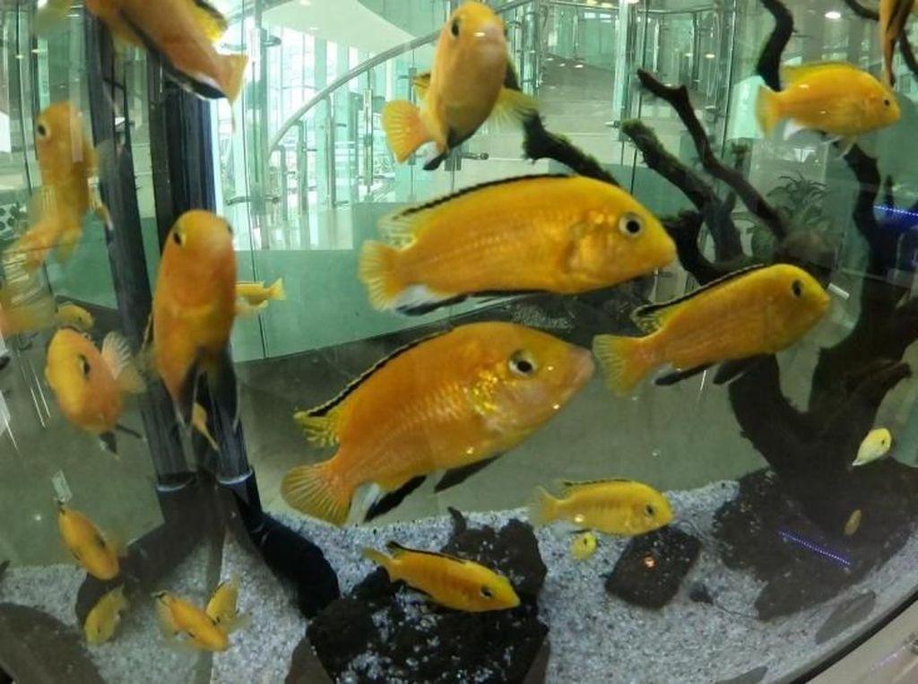 Ada Wisata Edukasi Ikan di Tengah Kota Jakarta