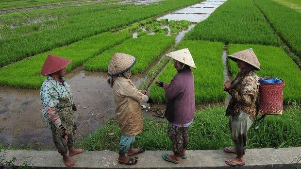 Petani, Riwayatmu di Tangan Jokowi