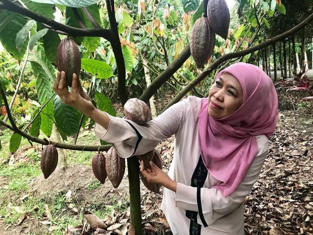 Mengintip 5 Momen Khofifah Cicip Srikaya, Kakao, hingga Timun Suri