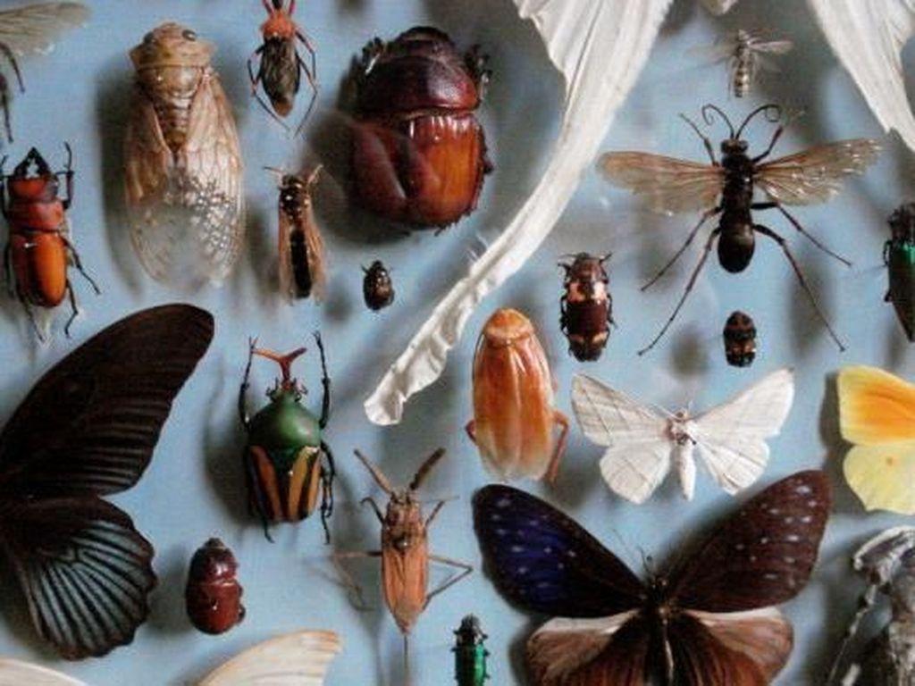 Penurunan Populasi Serangga Dianggap Mengkhawatirkan