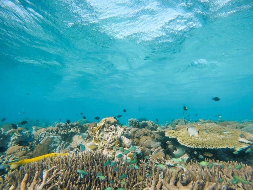 Foto: Indah Nian Alam Bawah Laut Taka Makassar
