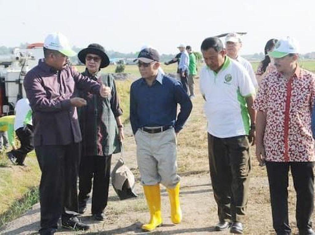 Padi Indonesia Sukses Ditanam di Brunei Darussalam