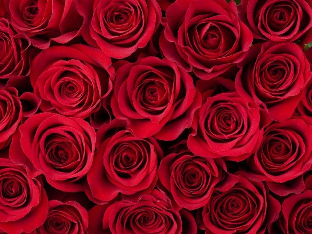Warga Arab Saudi Siap Rayakan Hari Valentine yang Tadinya Haram