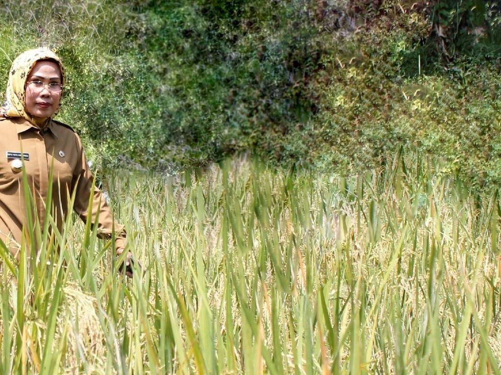 Pemkab Serang Catat Kelebihan Produksi Pangan di 2018