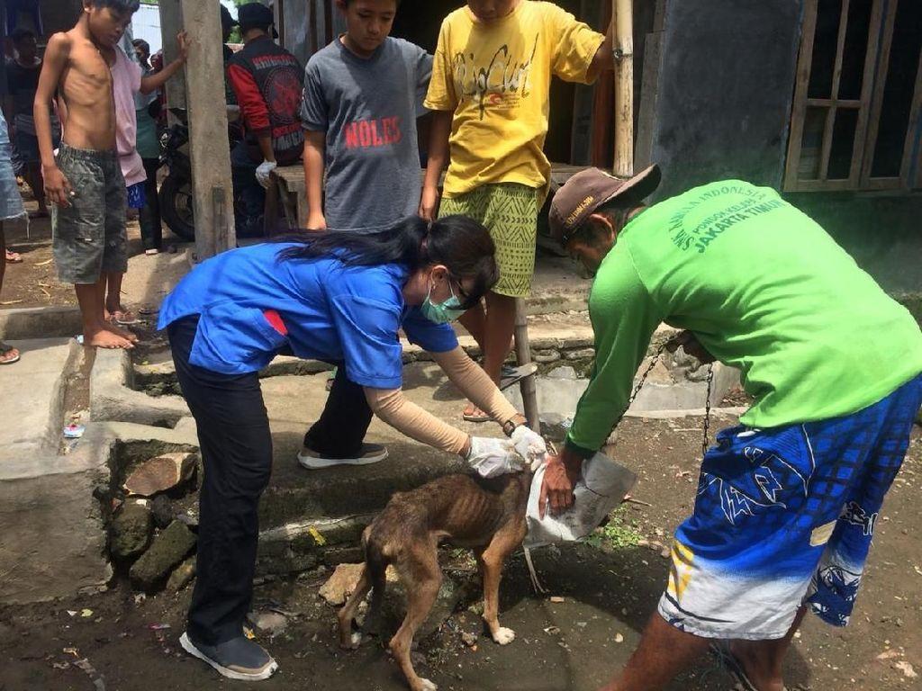 Ribuan Anjing Dibantai, Rabies di Dompu Masih Mengintai