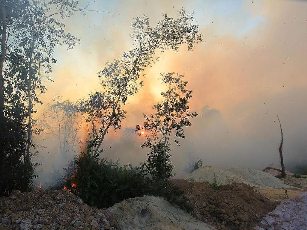 Kebakaran Hutan dan Lahan di Riau Makin Meluas