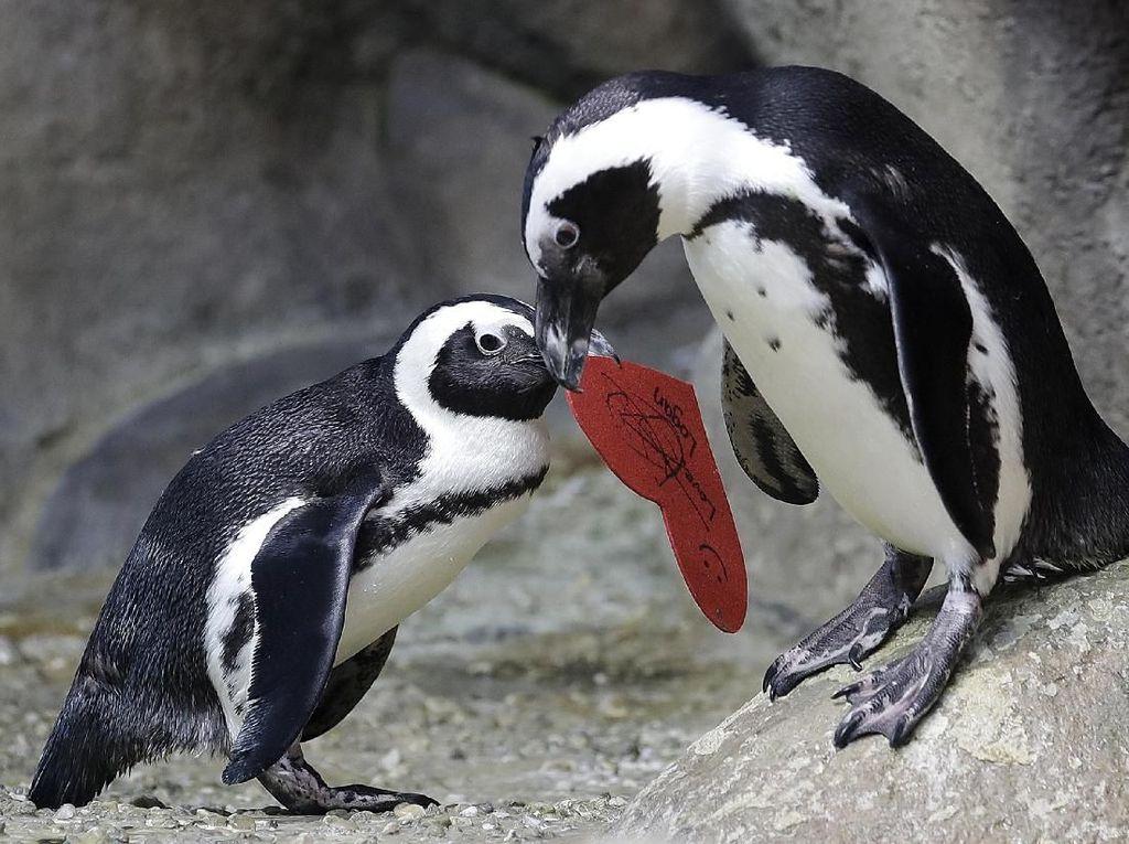 Deretan Tingkah Lucu Hewan Mengungkapkan Kasih Sayang