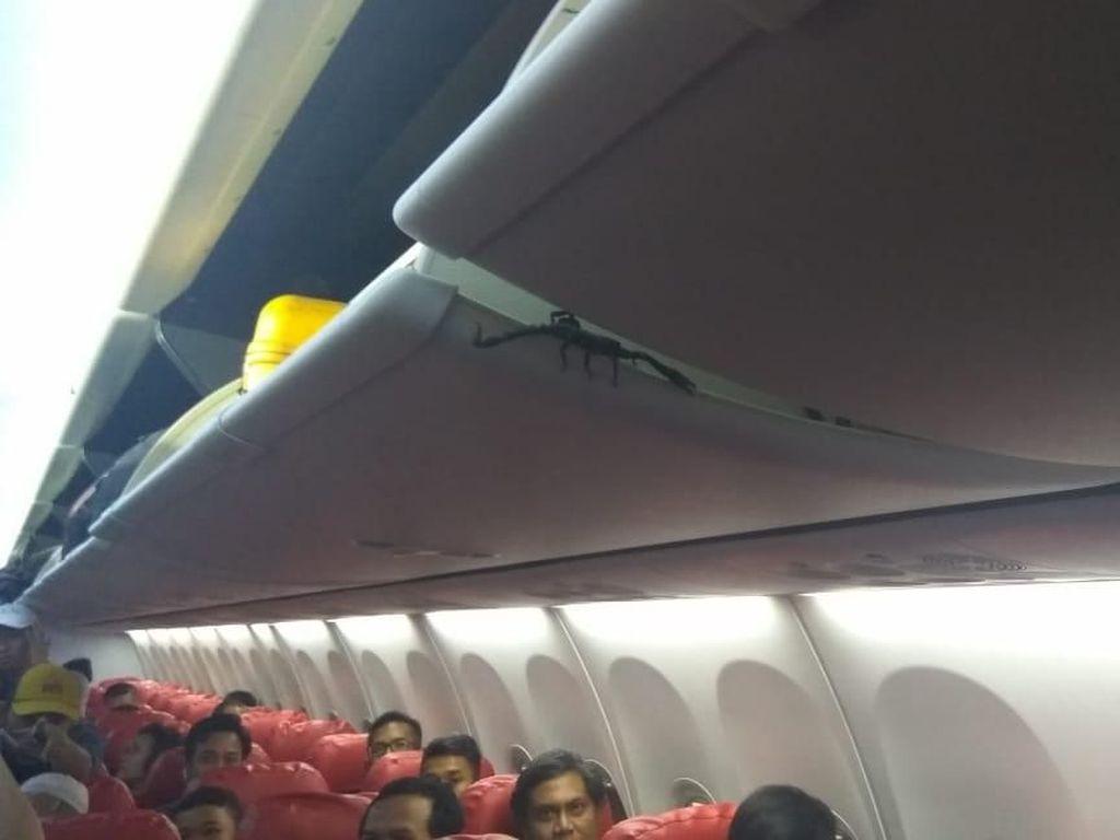 Kalajengking di Kabin Lion Air Bikin Panik Penumpang