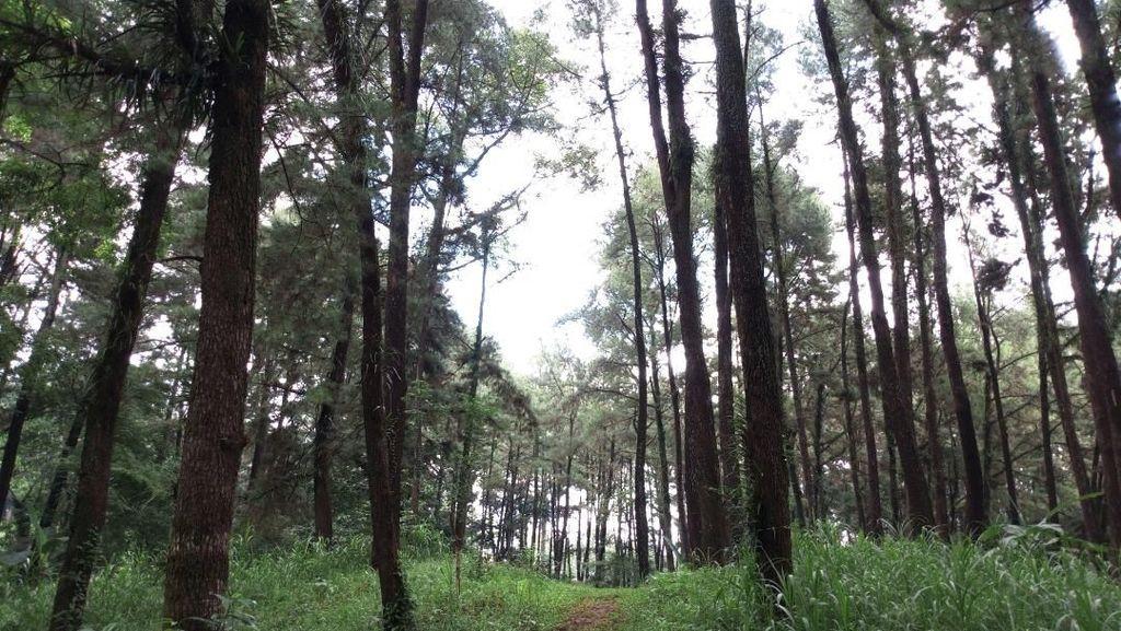 Foto: Dari Jalan Tol Trans Jawa, Bisa ke Hutan Cemara di Semarang