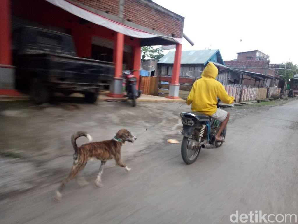 Rabies Hantui Warga Dompu NTB, Bocah 9 Tahun Digigit Anjing Gila