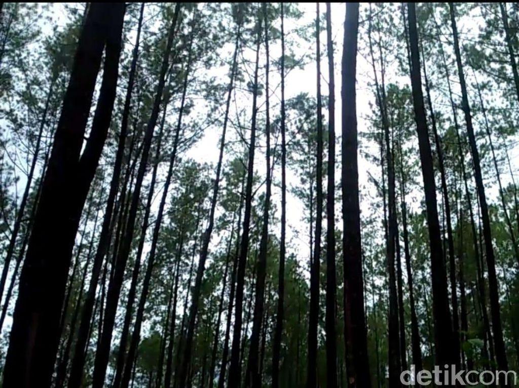Melihat Lahan 120 Ribu Hektare yang Dikuasai Prabowo di Aceh