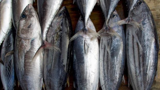 Fresh fish counter - raw tuna in a row, top view. Tuna on market in Sri Lanka.