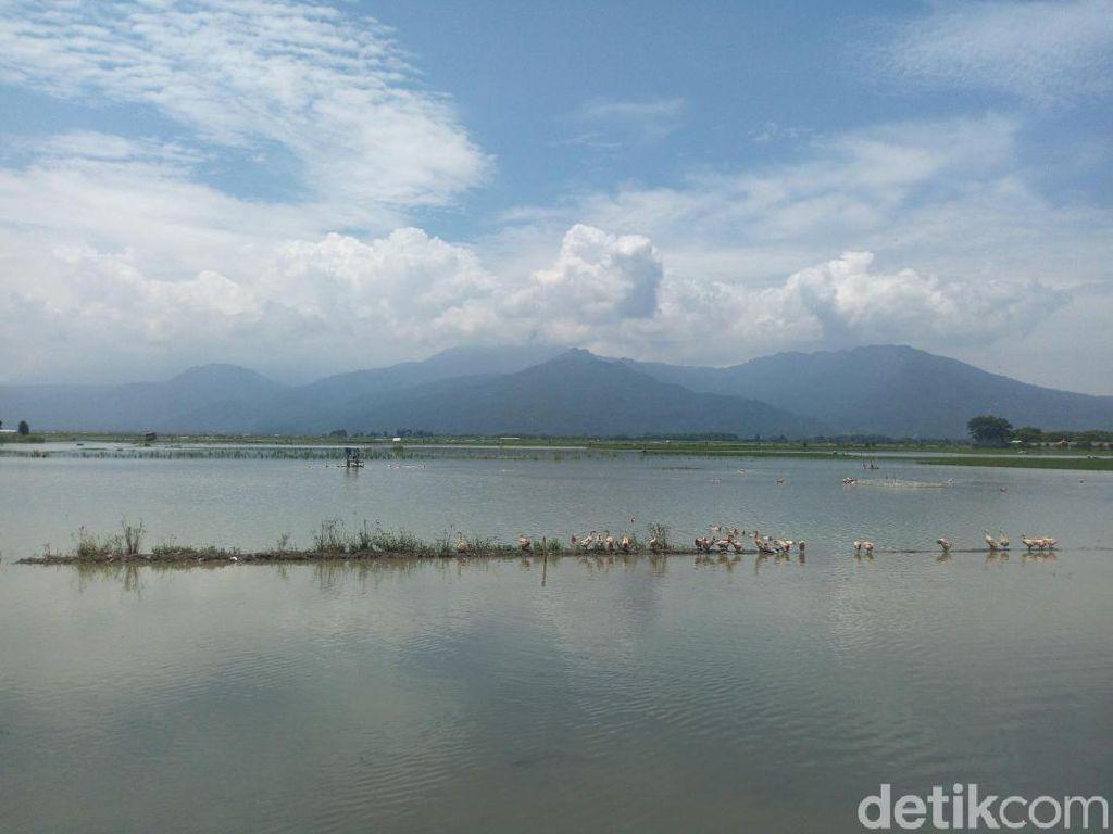 Danau Rawapening, Mau Gitu-gitu Aja?