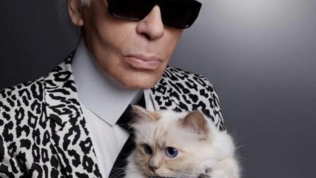 Si Lucu Choupette, Kucing yang dapat Warisan Rp 281 M dari Karl Lagerfeld