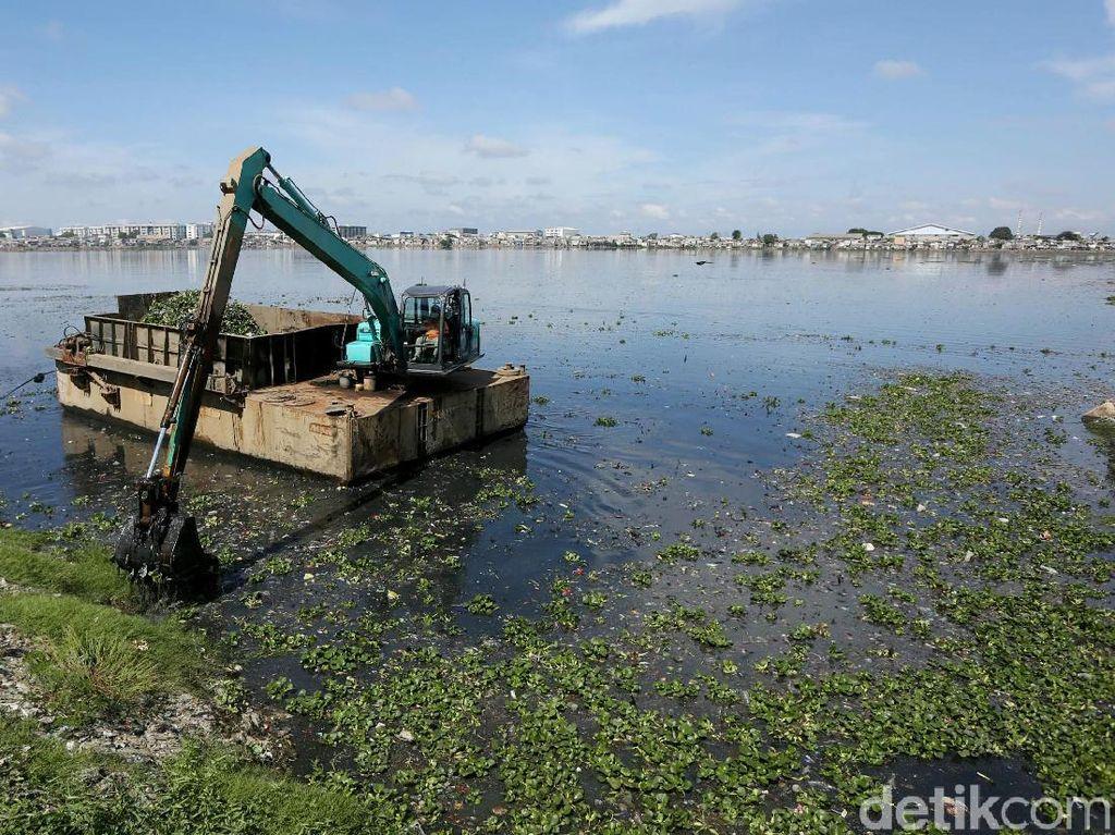 Petugas UPK Badan Air Bersihkan Eceng Gondok di Waduk Pluit