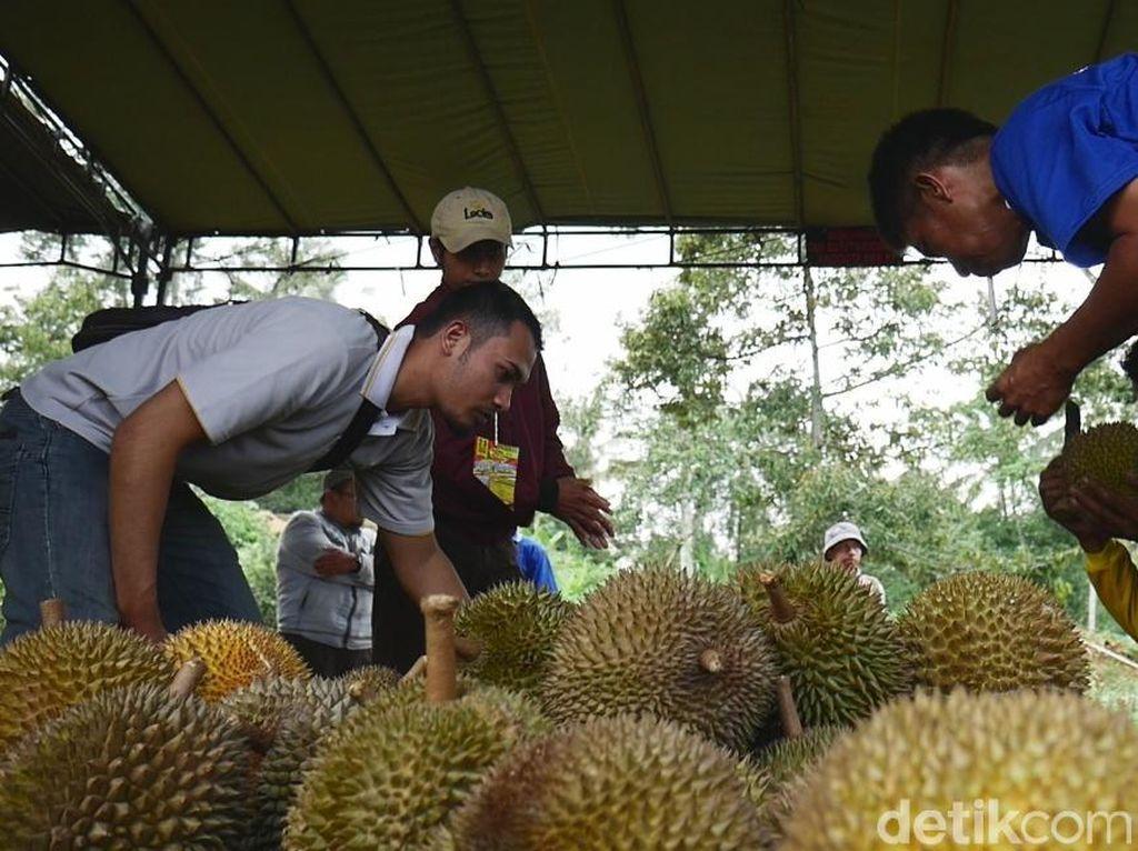 Serunya Pesta Seribu Durian Polobogo di Lereng Merbabu