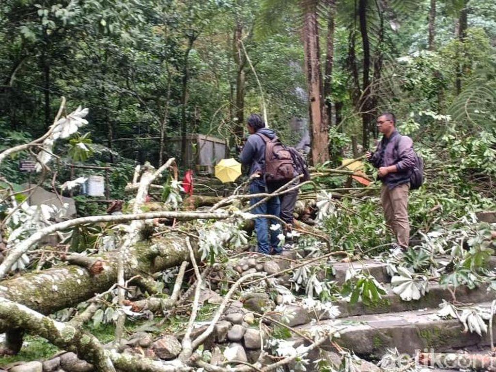 TNGM Tutup Lokasi Pohon Tumbang Tewaskan Wisatawan di Kaliurang