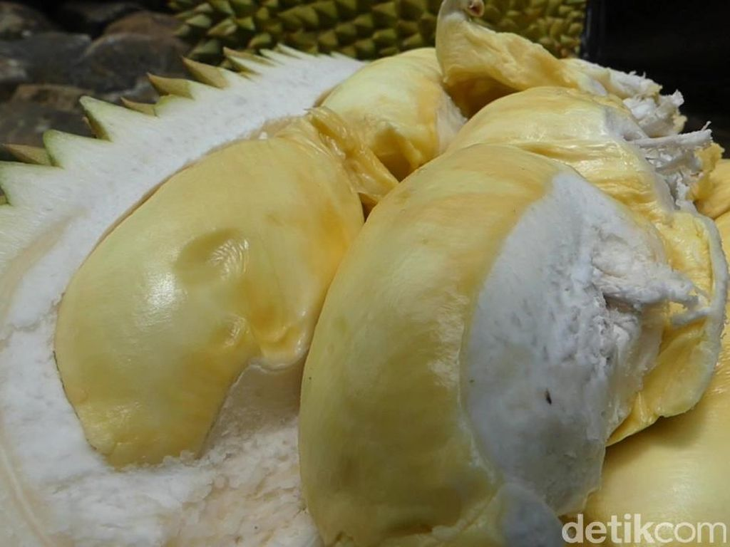 Asyiknya Makan Durian Kinanti dan Kampiun di Atas Bukit Karangmangu