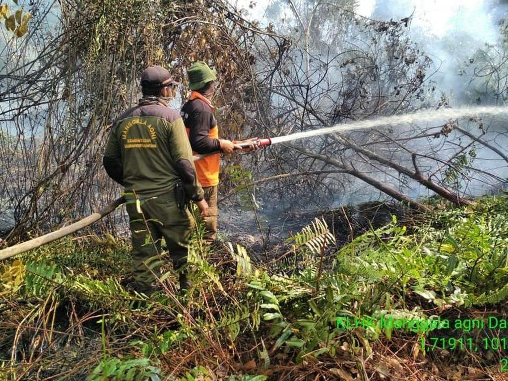 Taman Nasional Tesso Nilo Kembali Terbakar, Gajah Jinak Diungsikan