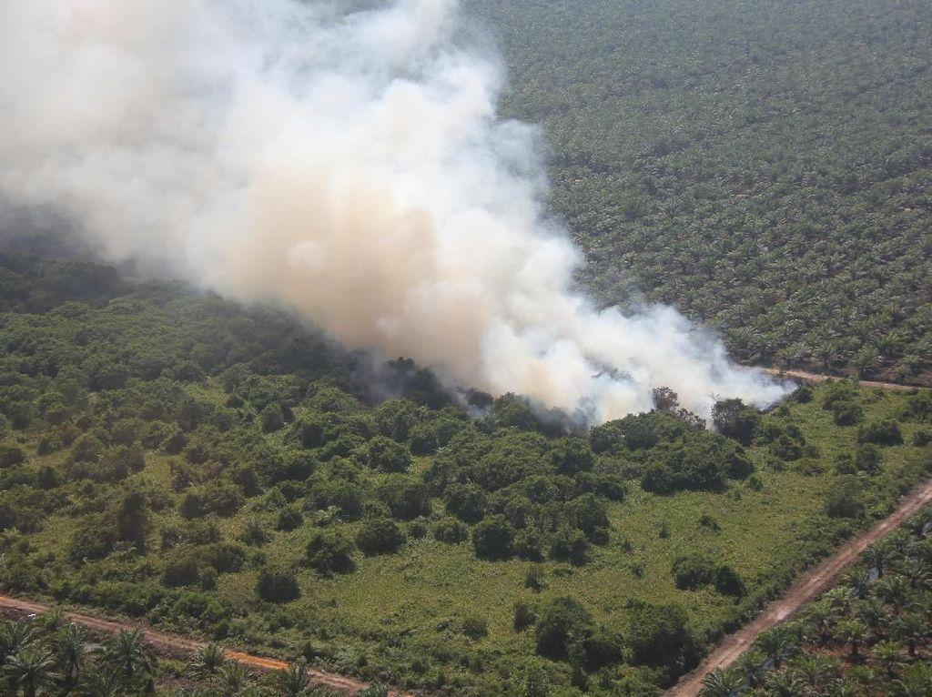 Dari 100 Titik, Hotspot Karhutla di Riau Kini Berkurang Jadi 17