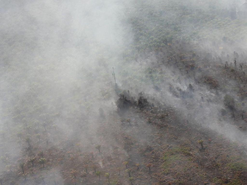 Aktivis Desak Kapolri Copot Kapolres yang Lahan dan Hutannya Terbakar