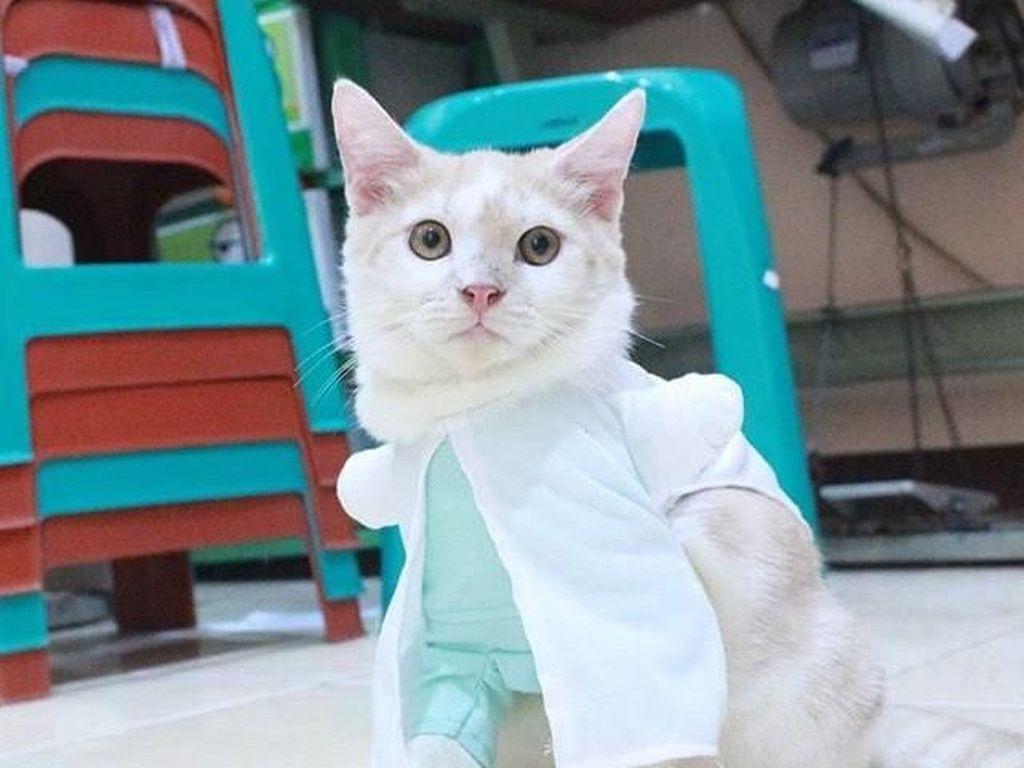 Wanita Ini Dihujat karena Lakukan Operasi Plastik Rp 20 Juta untuk Kucing