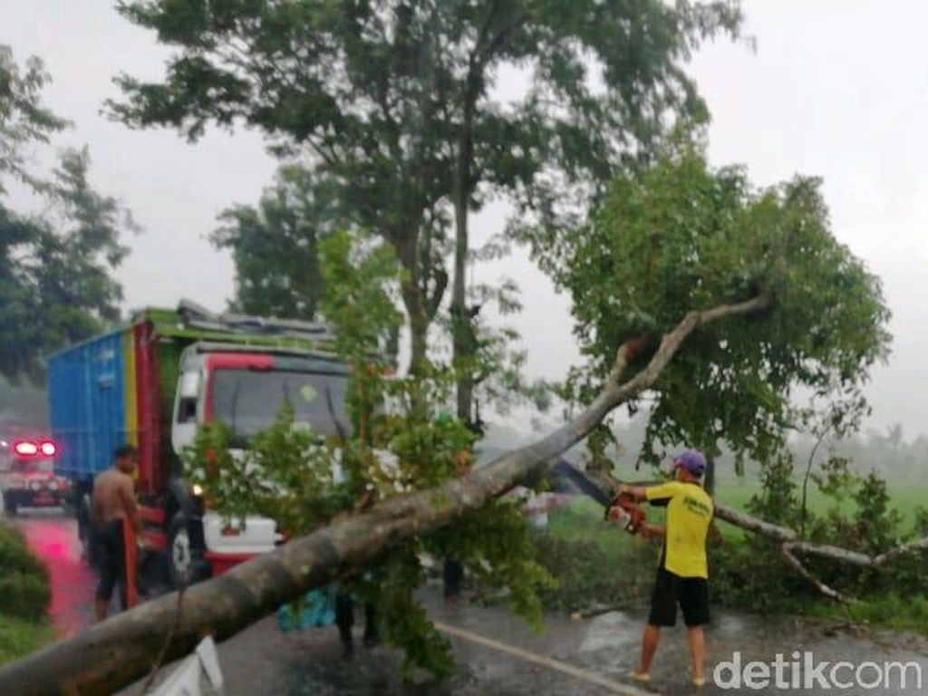 Angin Kencang Tumbangkan Pohon, Akses Malang-Blitar Terganggu