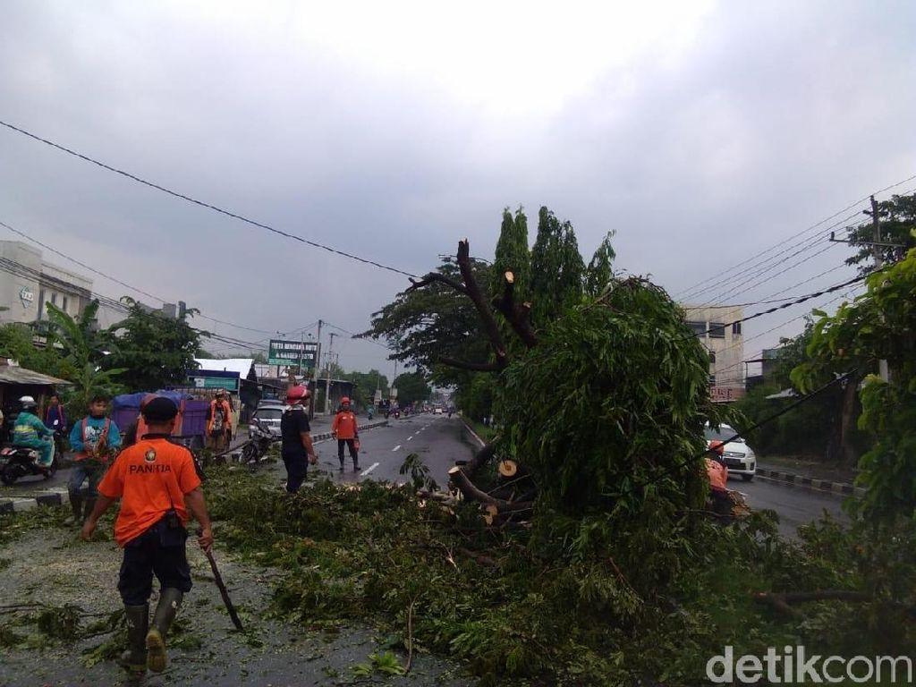 Hujan Deras Landa Bantul, 20 Pohon Tumbang