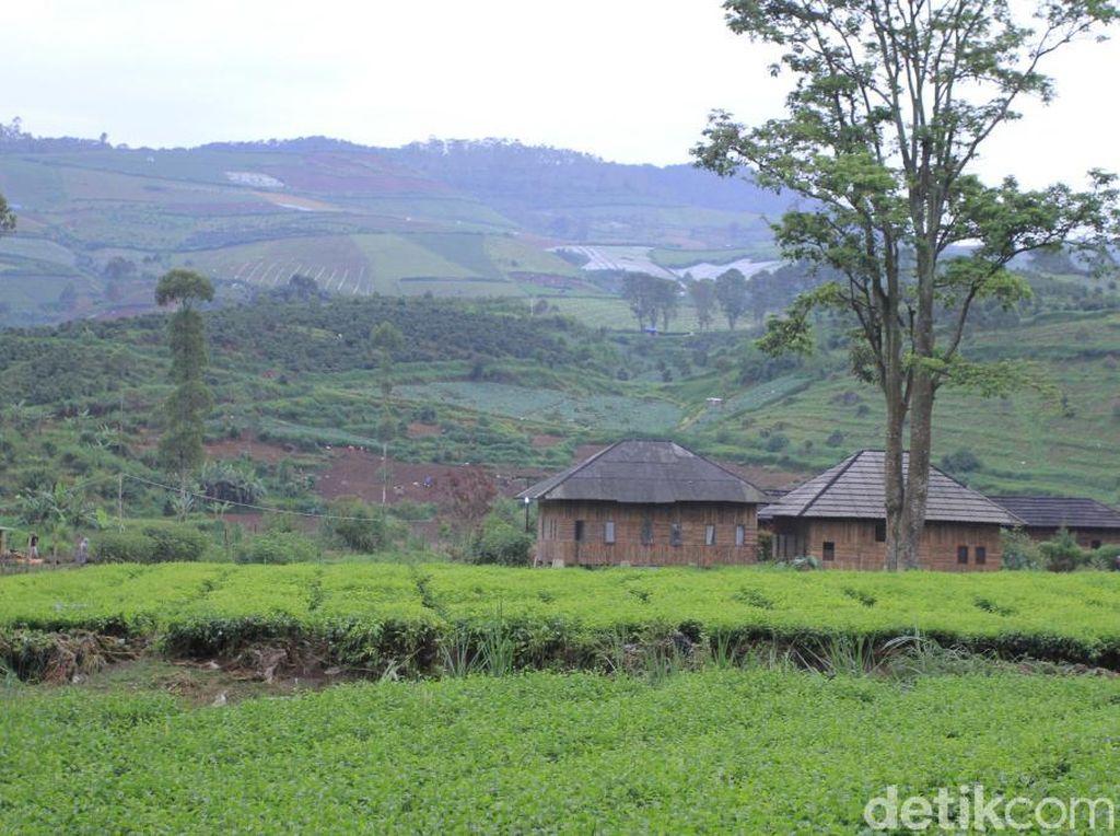 Bukan Alih Fungsi, PTPN Sebut Ada Oknum Jarah Tanah Untuk Sayuran