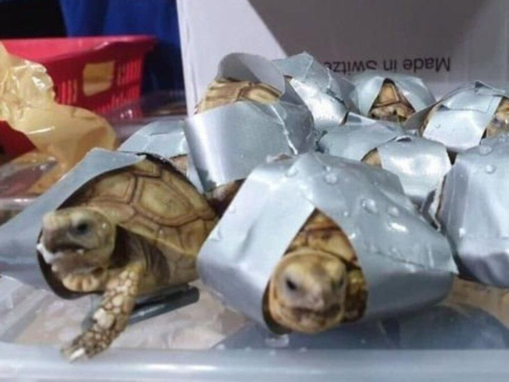 Polisi Filipina Sita 1.500 Kura-kura dan Penyu yang Dilakban