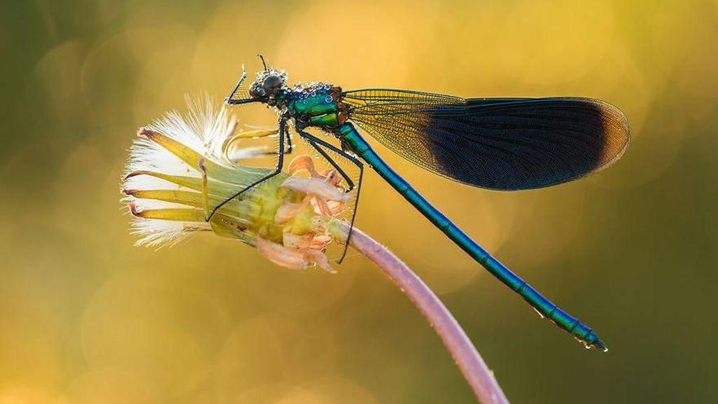 Kumpulan Foto Serangga dan Hewan dari Jarak Dekat