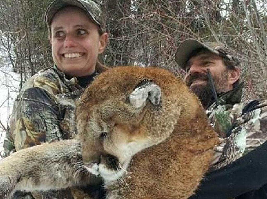 Santap Daging Singa Gunung Hasil Buruan, Pemburu Ini Bikin Geger