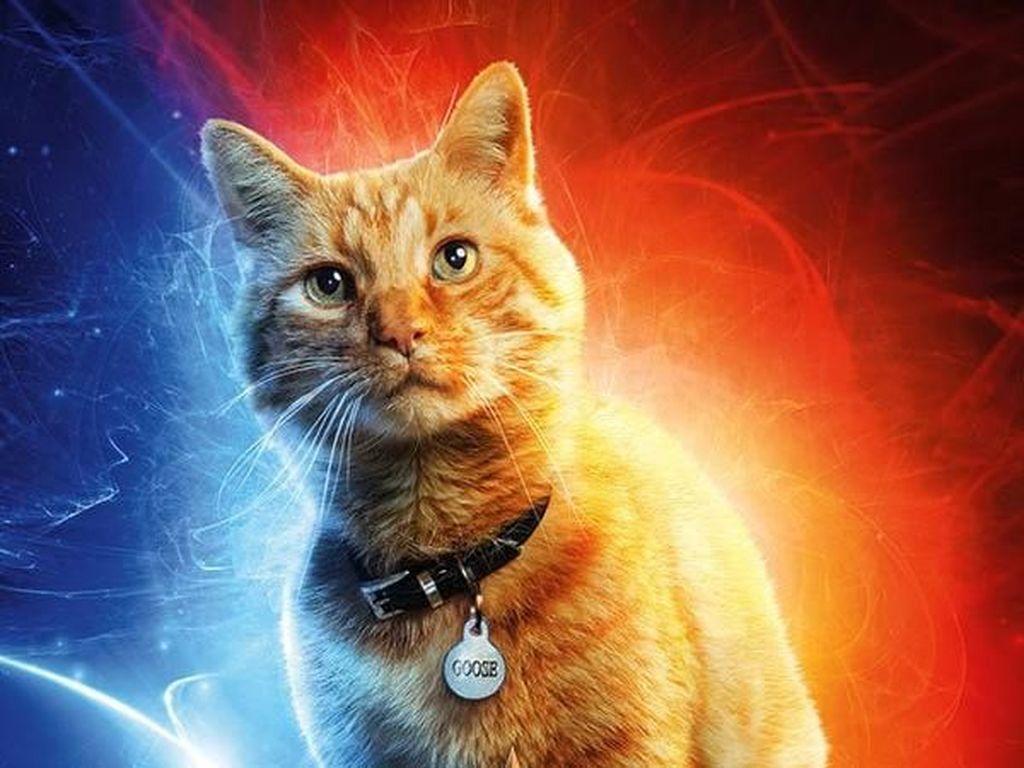 Goose Jadi Karakter Penting di Masa Depan Setelah Captain Marvel