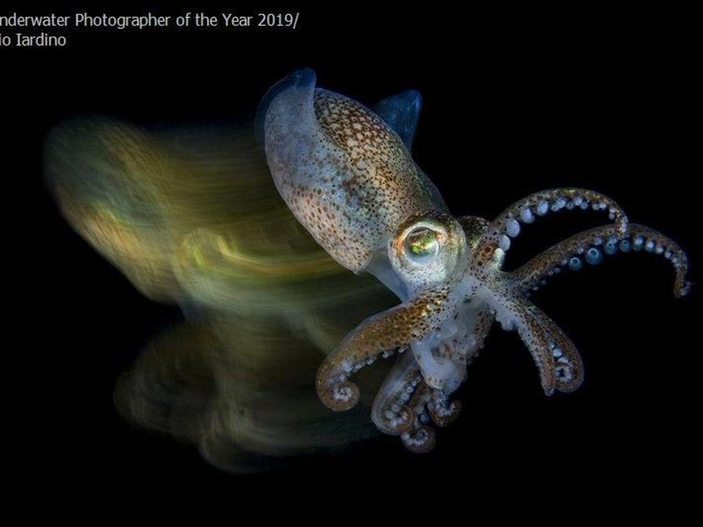 Karya Memukau Jawara Underwater Photographer of The Year 2019