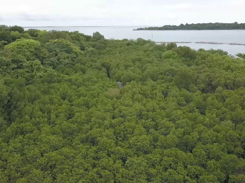 Melihat Laguna Mangrove Terbesar di Kepulauan Seribu