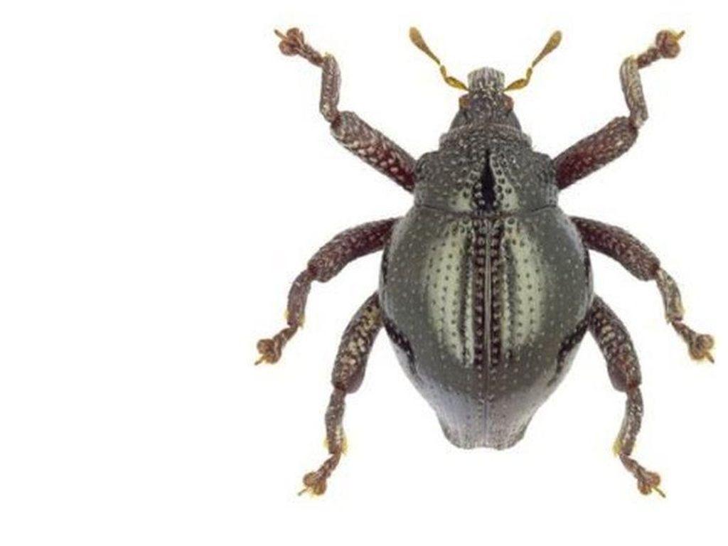 Lebih dari 100 Spesies Baru Serangga Ditemukan di Sulawesi