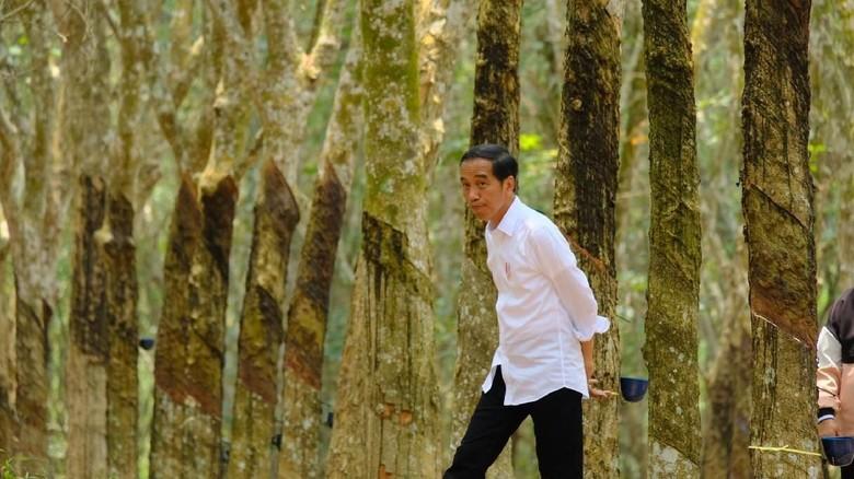 Surat Suara Tercoblos di Malaysia, Jokowi: Tak Ada Urusan Pemerintah