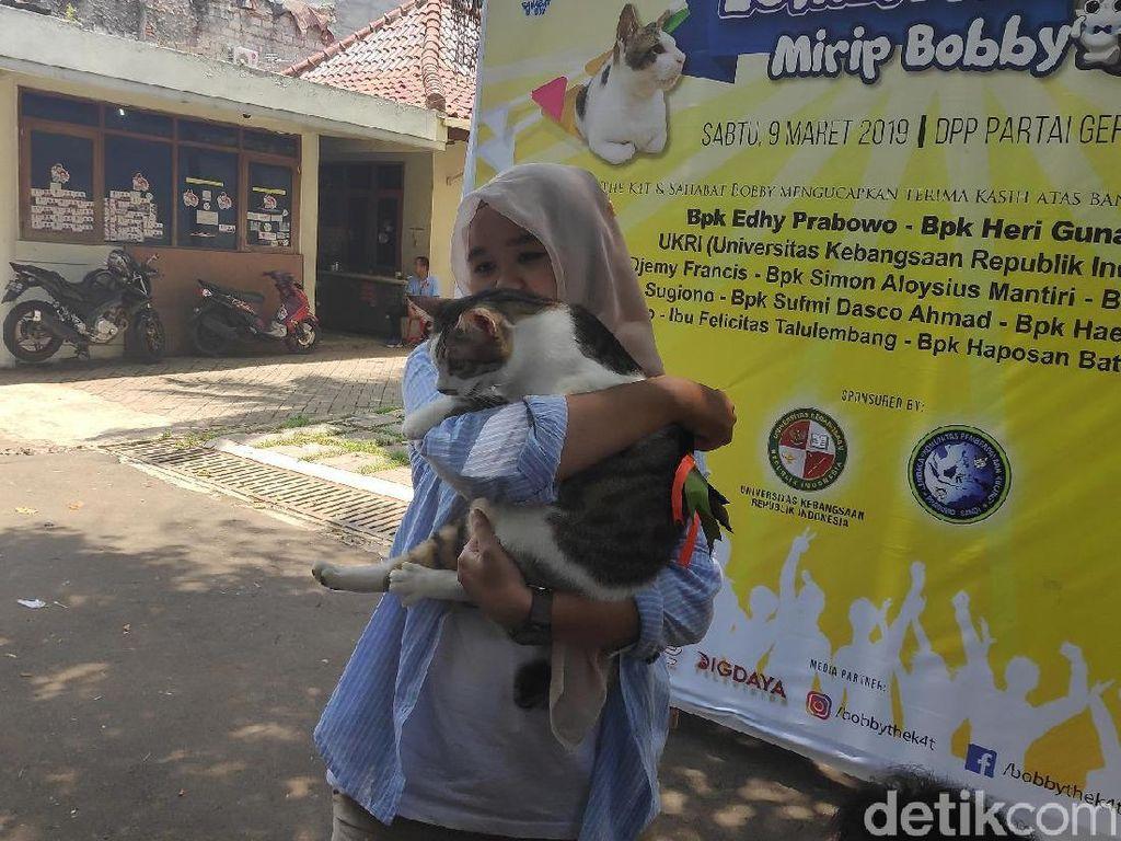Dulu Dibuang Pemilik, Bandi Juara Lomba Mirip Bobby Kucing Prabowo