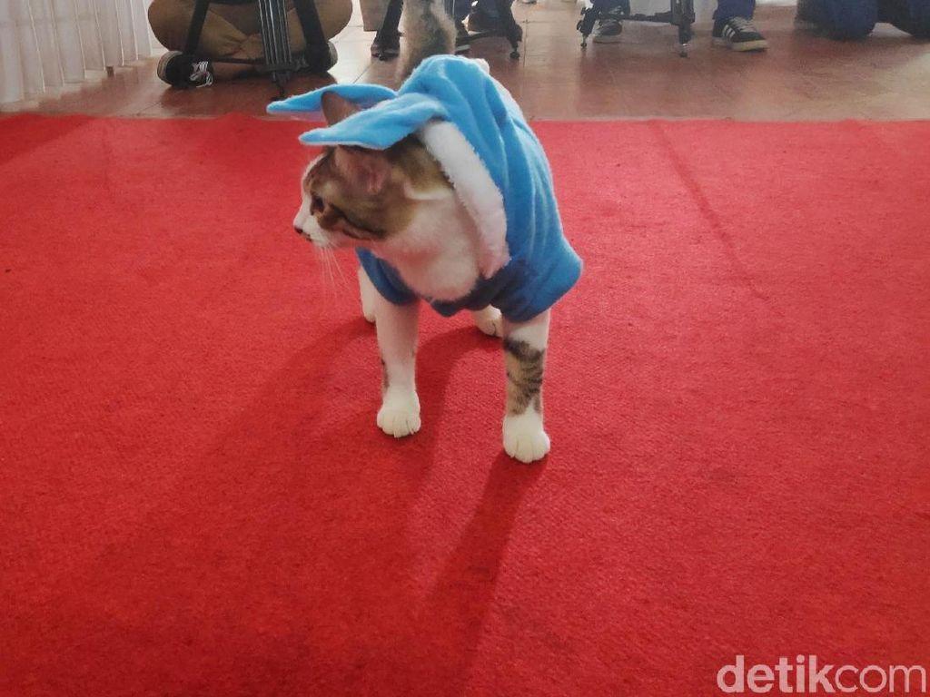 Bikin Gemes, Si Meong Fashion Show Mirip Bobby The Cat Milik Prabowo